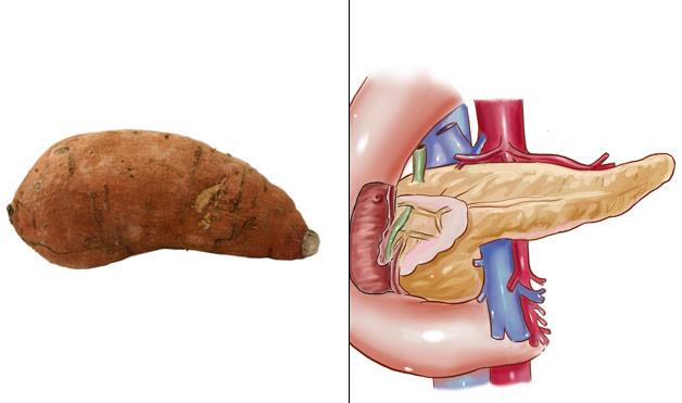 10-Sweet-Potatoes-PancreasFoods-That-Look-Like-Body-Parts-1