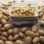 Зошто треба да јадете компири?