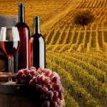 Анализа: македонско вино – масовно или ексклузивно производство?